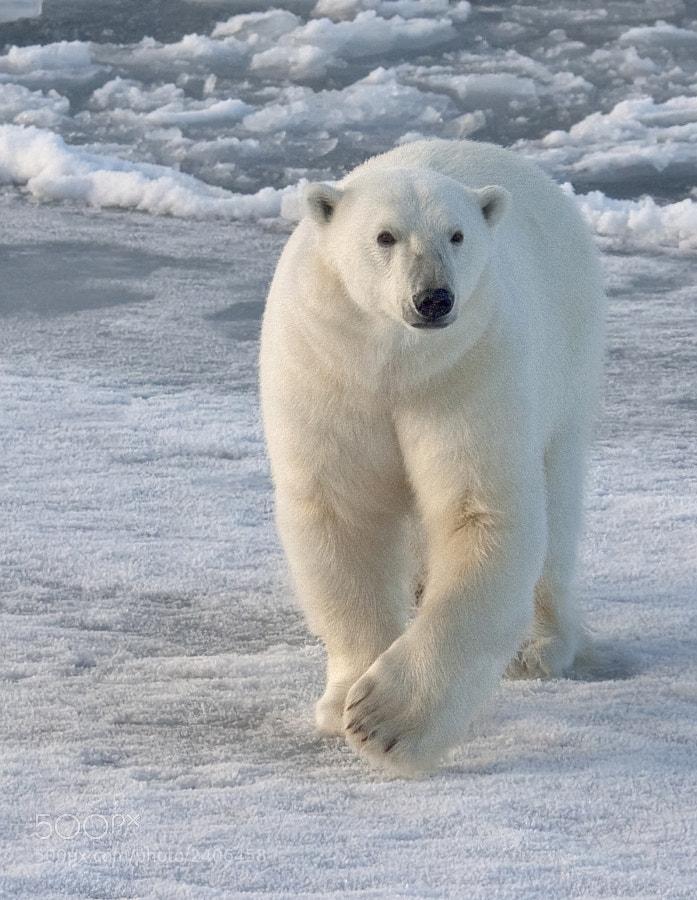 Taken in Svalbard, 8th september 2009