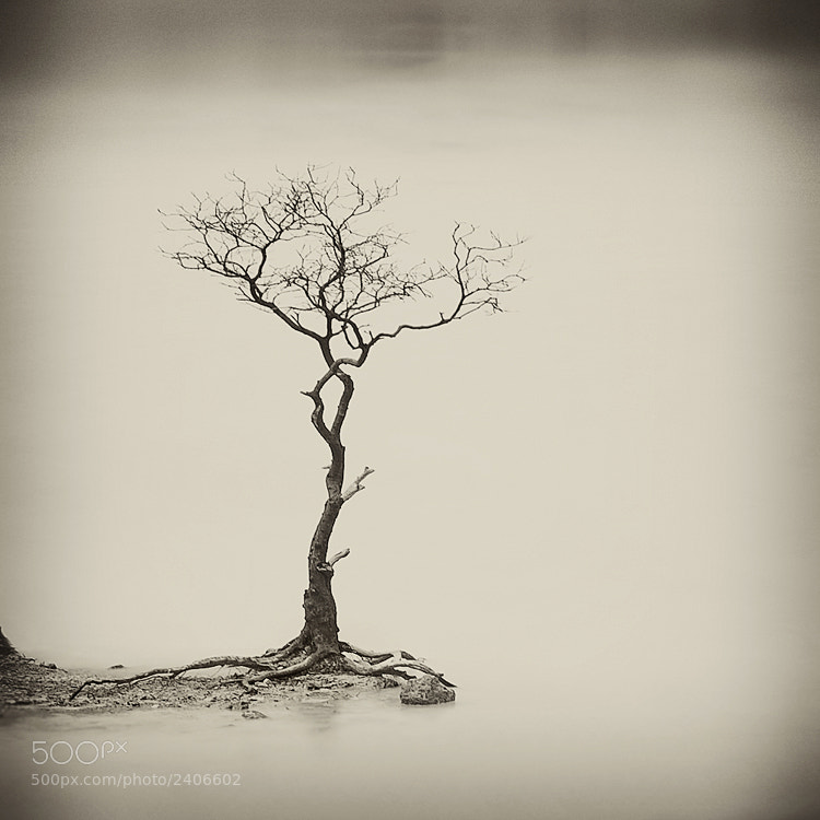 Photograph Zen Garden by Hengki Koentjoro on 500px