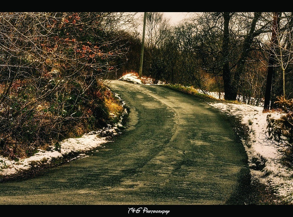 Photograph forest  road by T&G Photography  on 500px