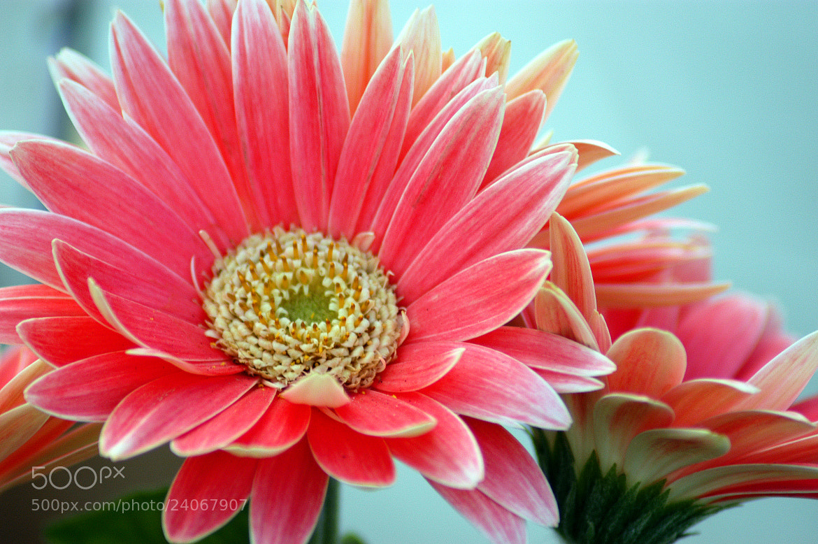 Photograph Flowers by Glenn  McGloughlin on 500px