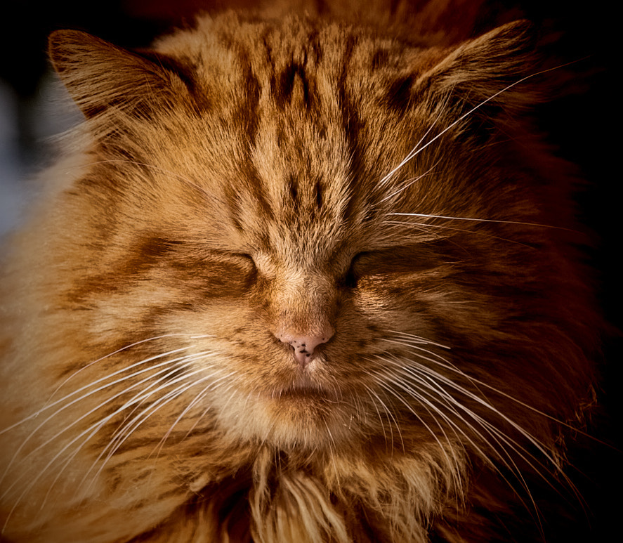 Photograph We called him Sunny by Serge Gagné on 500px