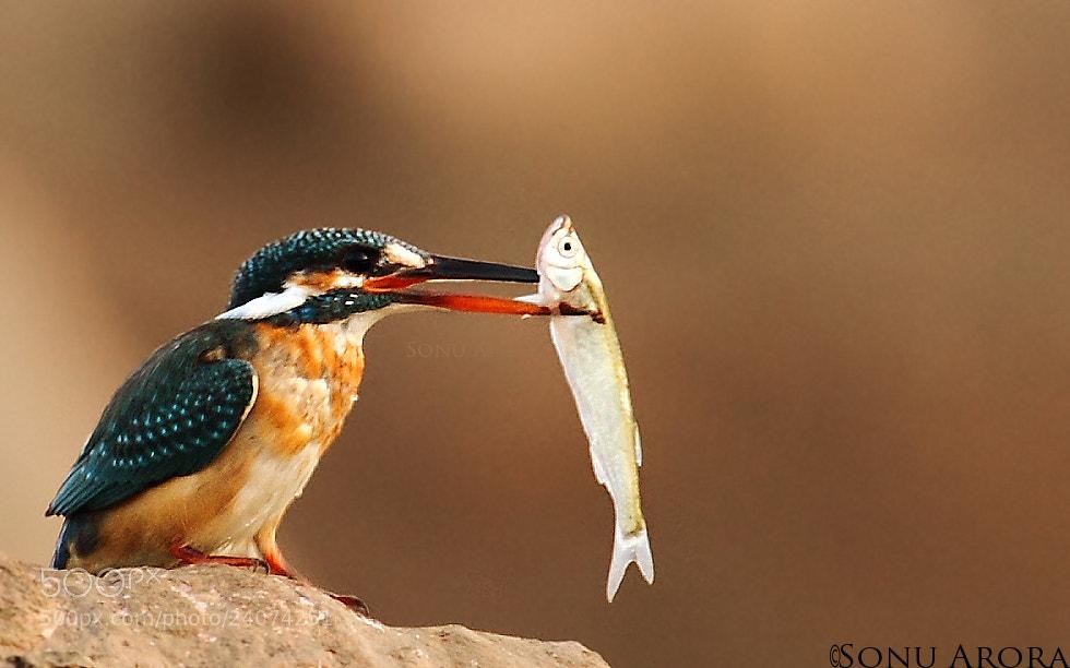 Photograph Fishinggggggg...... by Sonu Arora on 500px