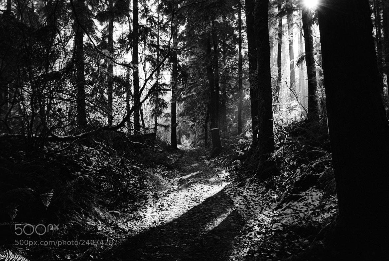 Photograph Winter Trail by Robert Warren on 500px