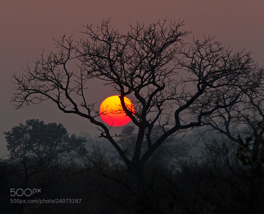 Sunset At Londolozi