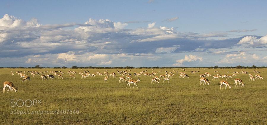 Taken in Central Kalahari Game Reserve, Botswana, 12th March 2009