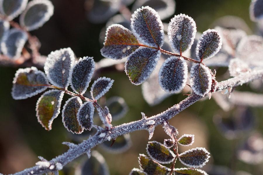 Figées (Frozen) de Christine Druesne sur 500px.com