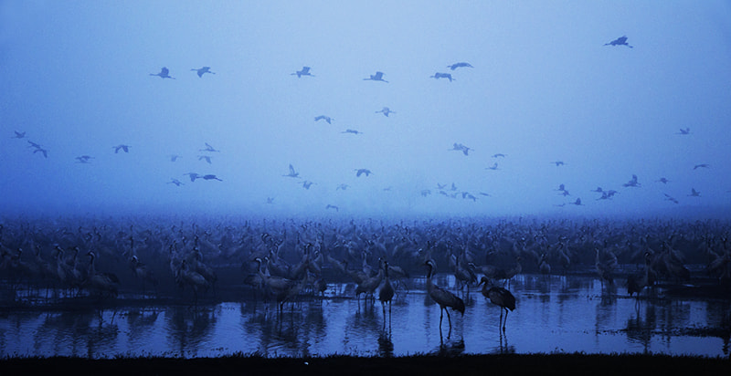 Photograph Cranes Land by Tomer Merav on 500px