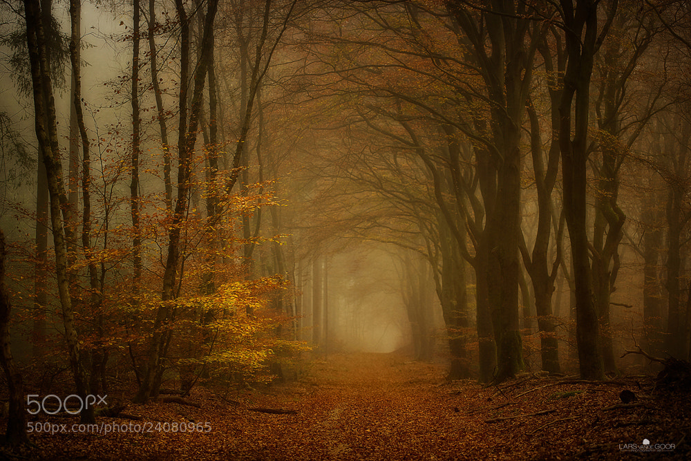 Photograph Wood B by Lars van de Goor on 500px