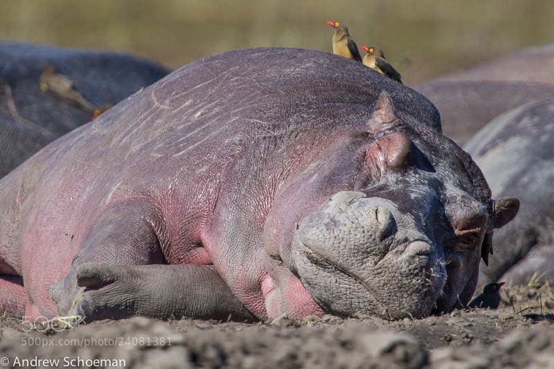 Photograph Sleeping In ! by Andrew Schoeman on 500px