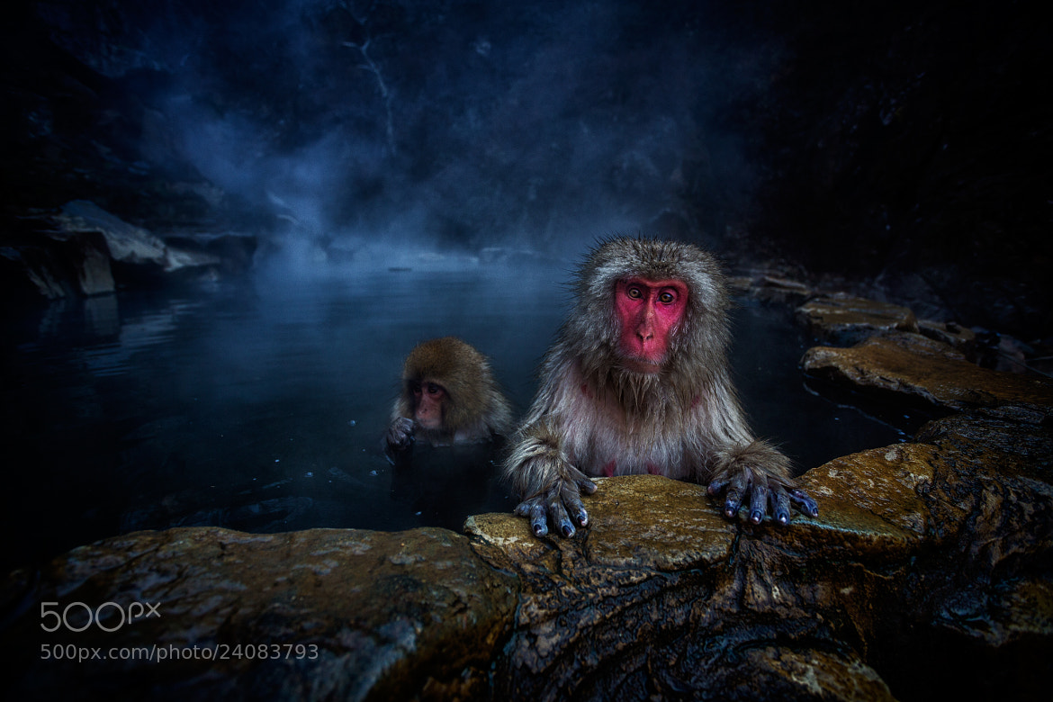 Photograph Monkey Business :-| by Geoffrey Gilson on 500px