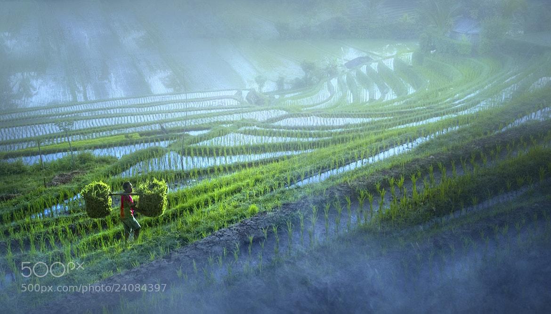 Photograph Morning activities by Saelan Wangsa on 500px