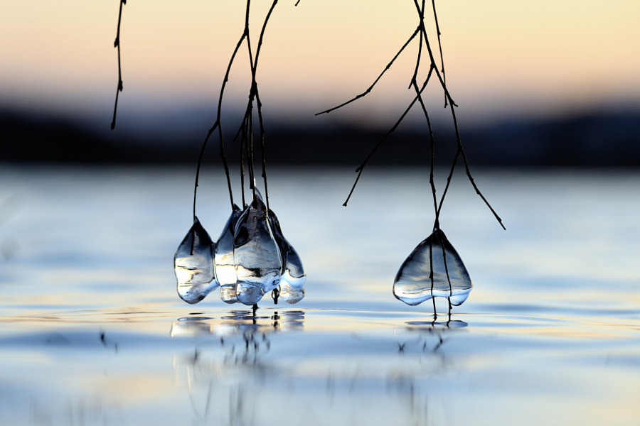Photograph Ice drops by Kolbjørn Pedersen on 500px