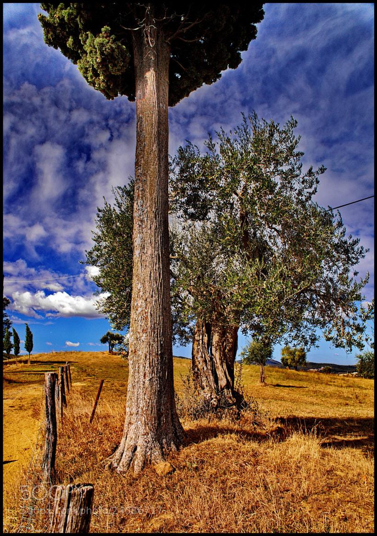 Photograph  Woods of Toscana by Lorenzo ROSIGNOLI on 500px