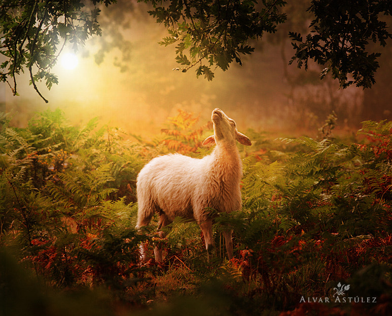 Photograph Agnus Dei by Alvar Astúlez on 500px