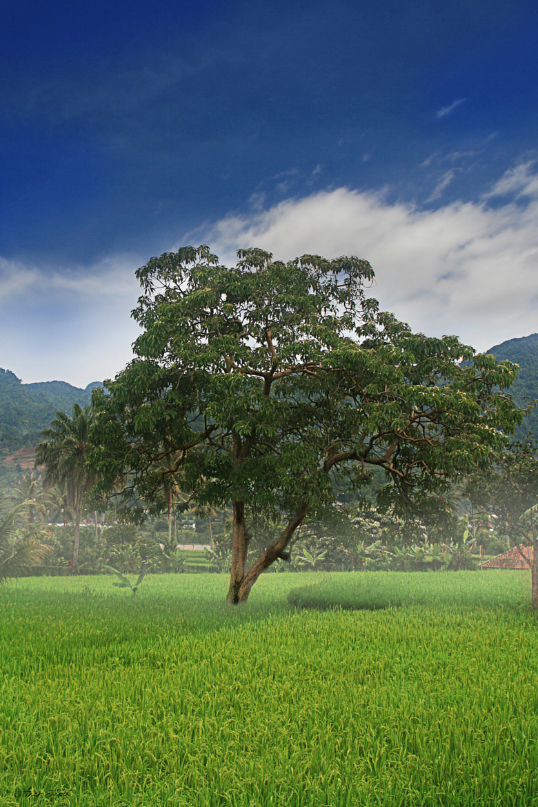 Photograph west java by anom himura on 500px