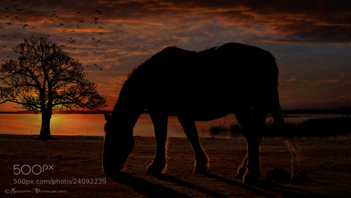 Photograph The horse by Giuseppe  Peppoloni on 500px