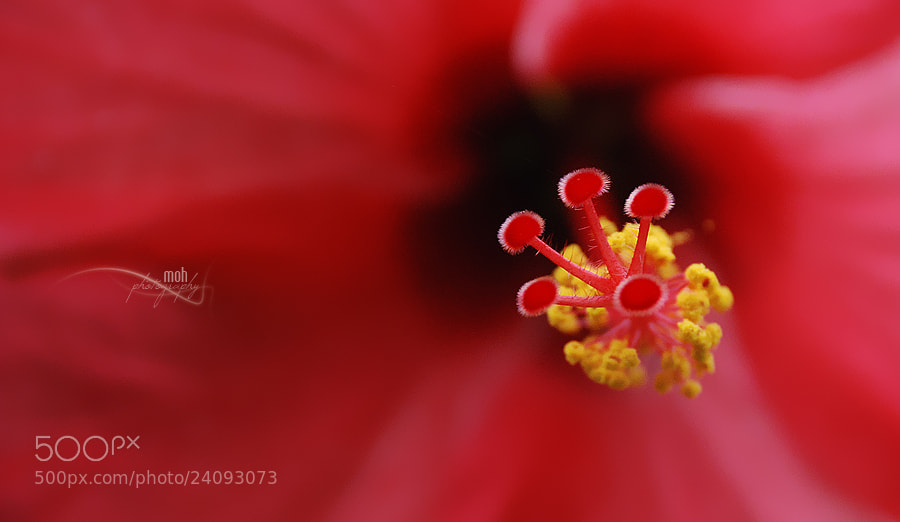 Photograph Stamens by Mohan Duwal on 500px