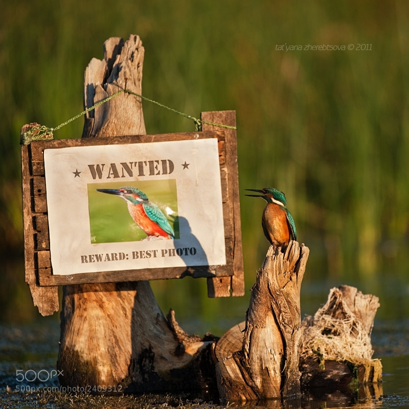 Photograph Wanted  by Tat'yana Zherebtsova on 500px