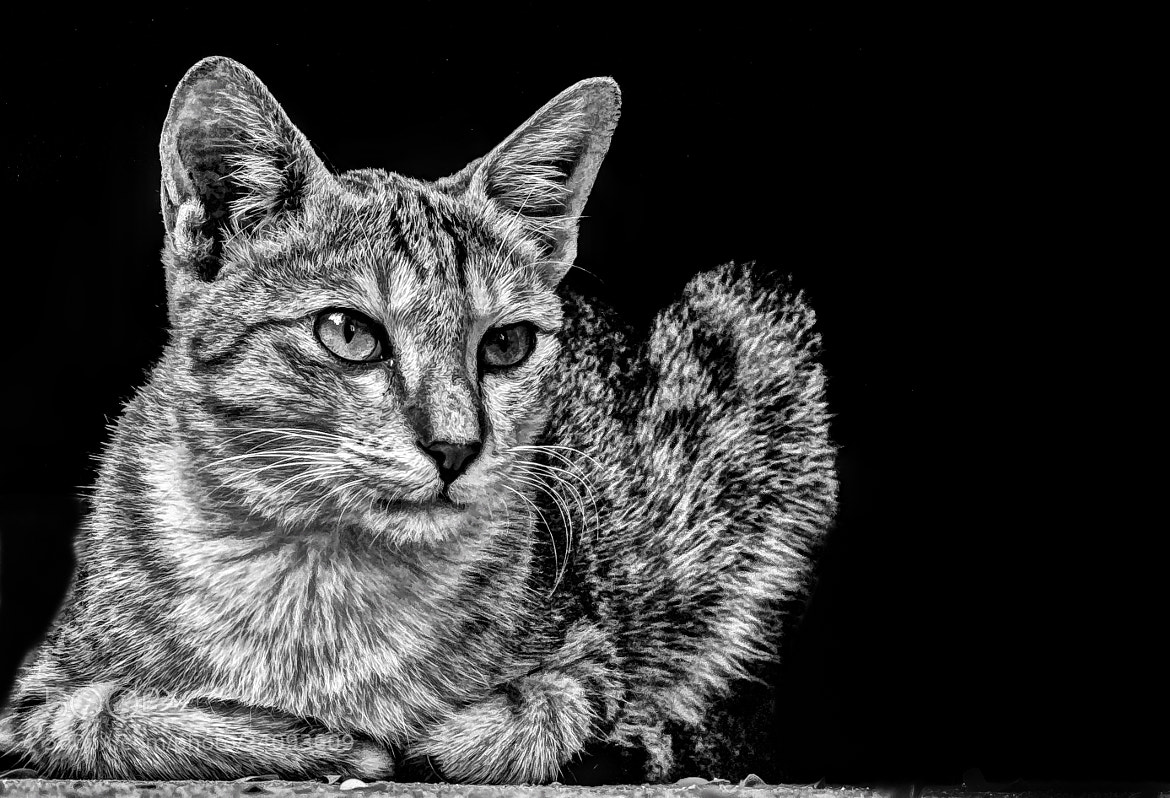 Photograph kat by Aravindh Ganesh on 500px
