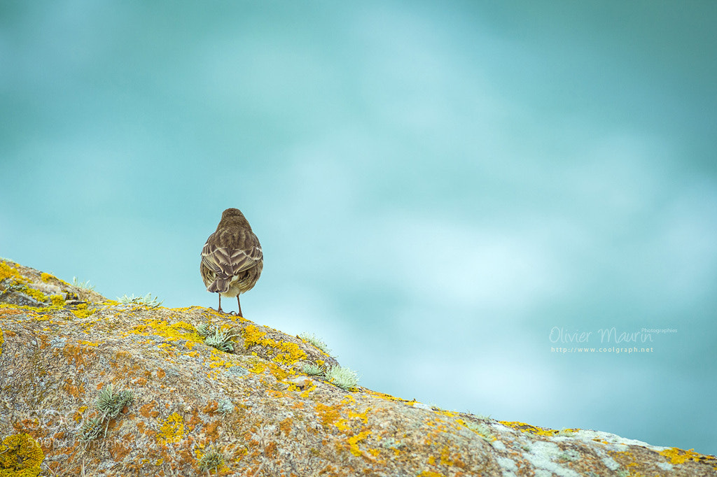 Photograph Alone with nature by Olivier Maurin on 500px