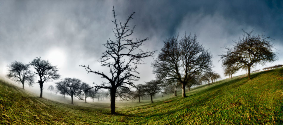 Photograph Trees in the mist  by Nigel Harniman on 500px