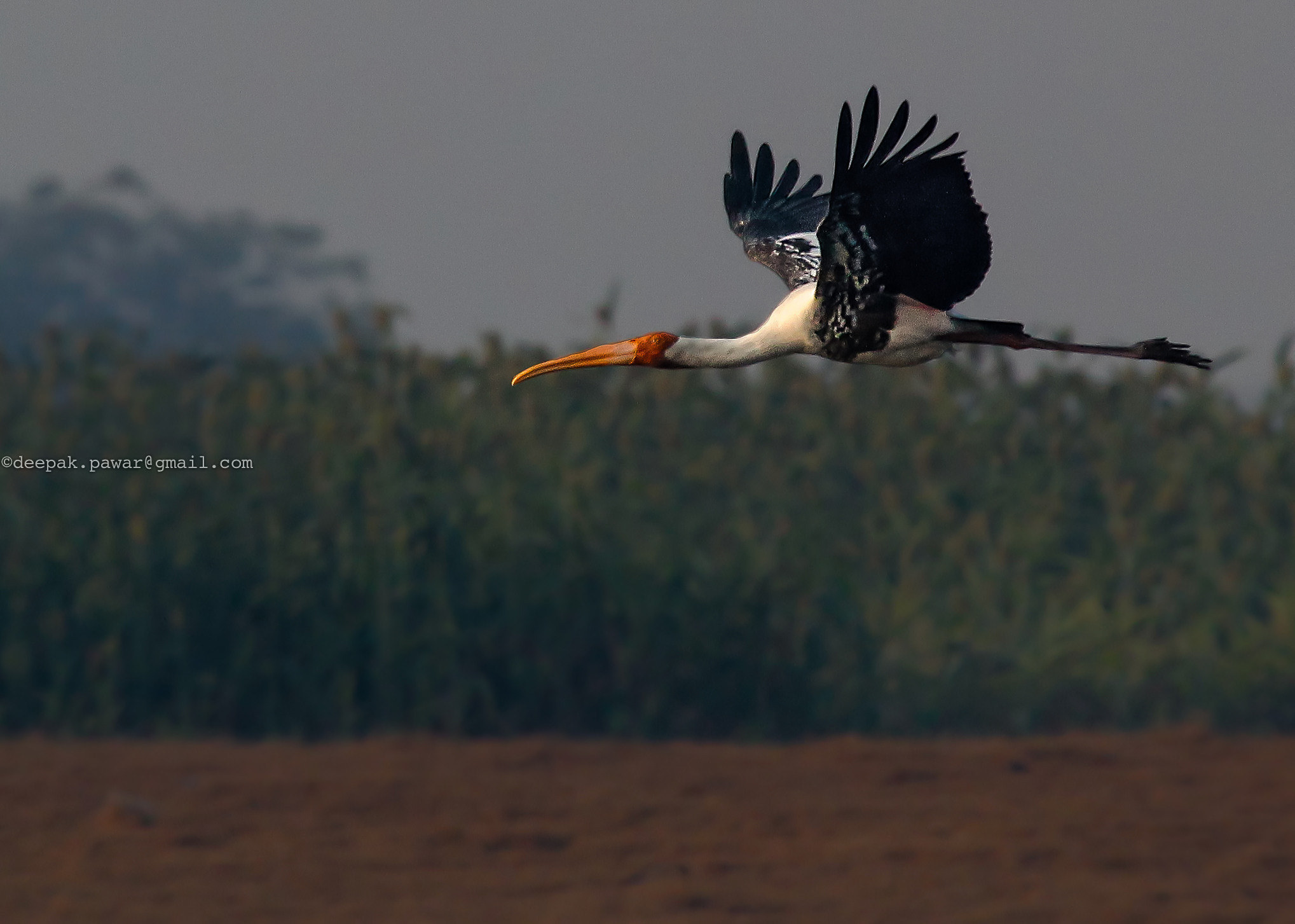Photograph Painted stork by Deepak Pawar on 500px