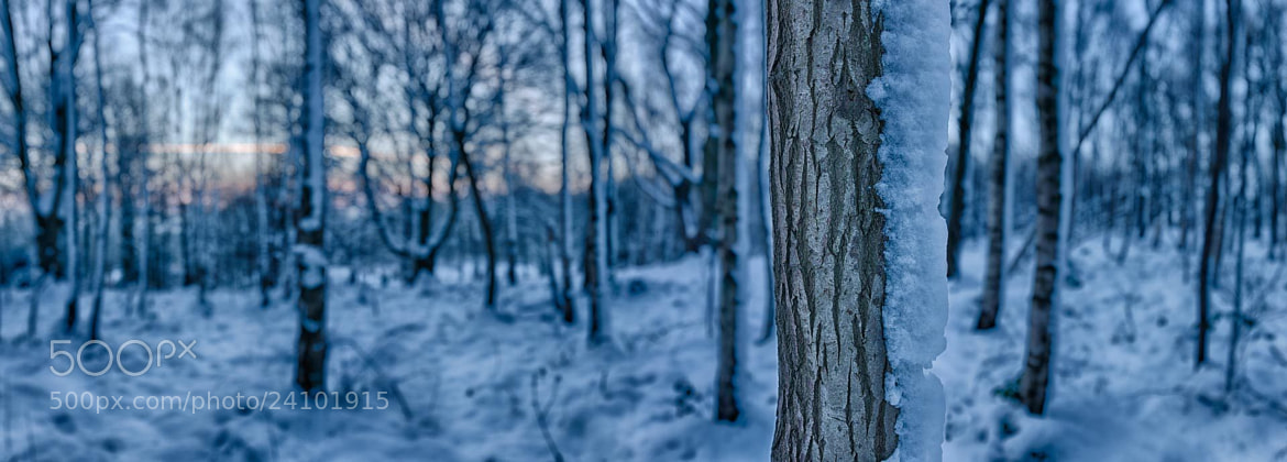 Photograph Trees in Snow by Nigel Harniman on 500px