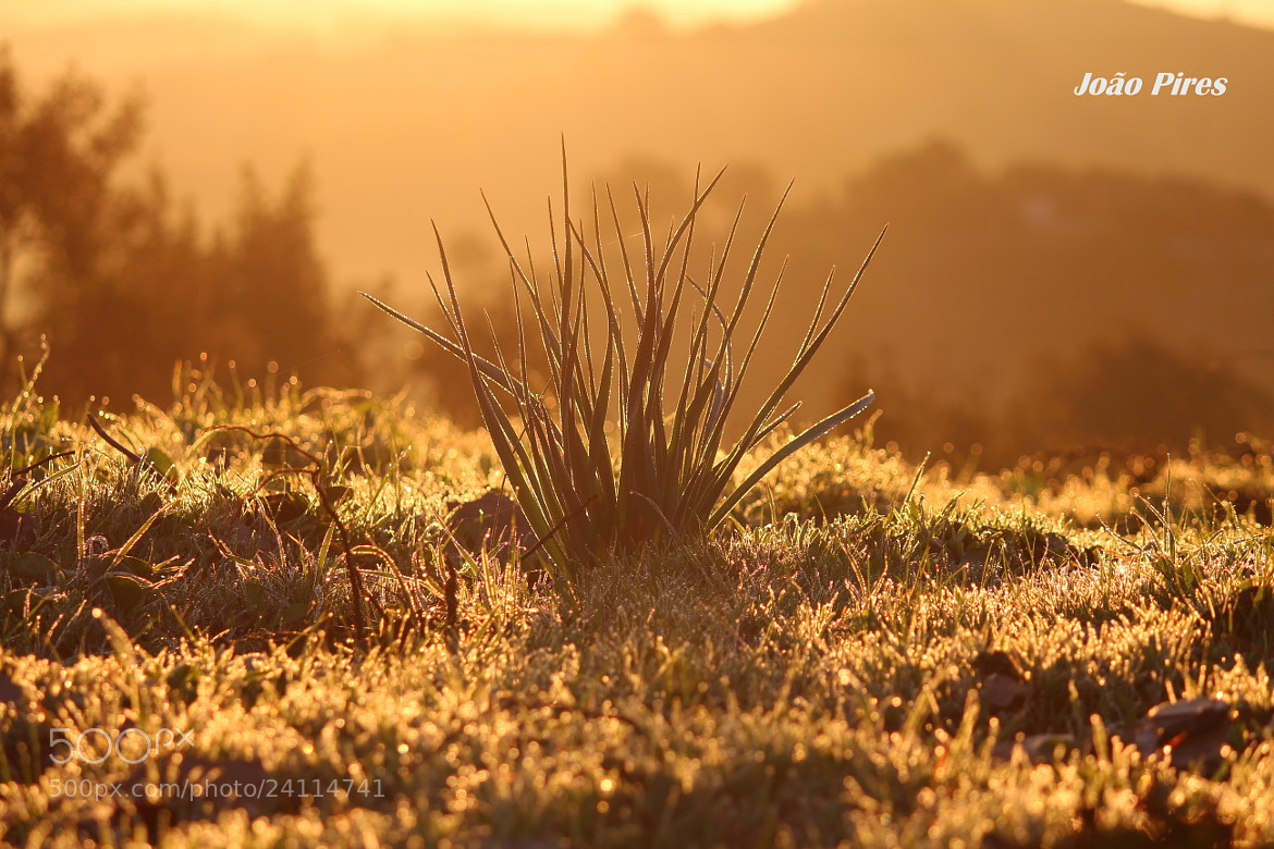Photograph Plants And Sunrise!! by João Pires on 500px