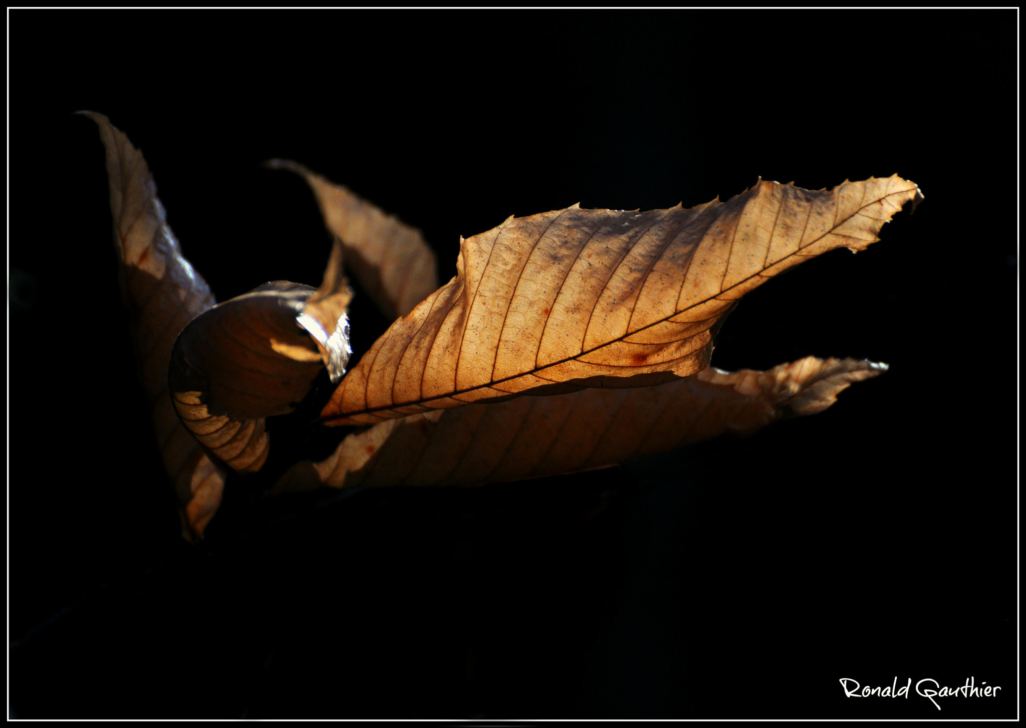 Photograph Another Season by Ron Gauthier on 500px