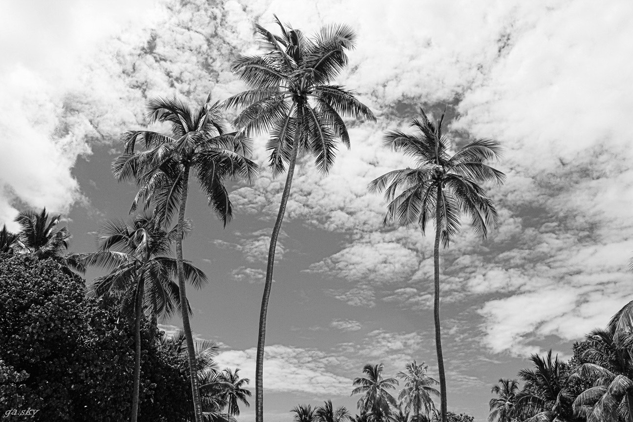 Photograph Palm Trees in Black and White by Gabi Seidowsky on 500px