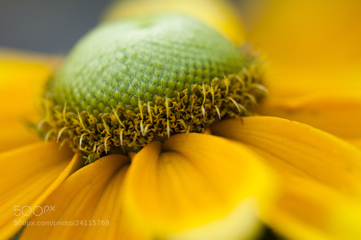 Photograph yellow by Mikk Holst on 500px