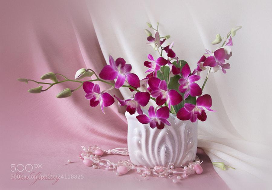 Photograph Orchids by Elen Gardzey on 500px
