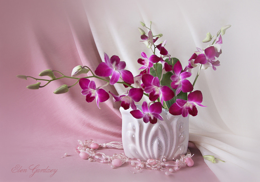 Photograph Orchids by Elen Gardzey on 500px