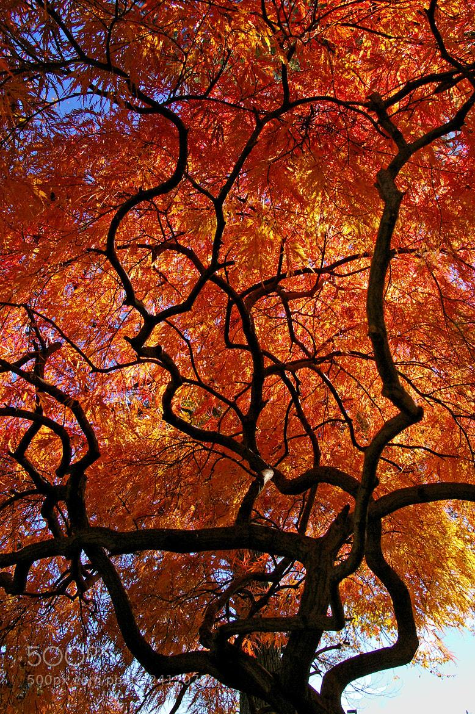 Photograph Burning Bush by Jay B. Wilson on 500px