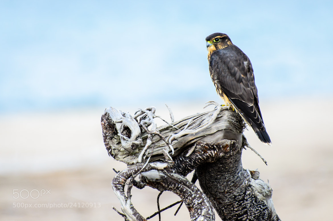 Photograph Merlin II by Laurens Kaldeway on 500px