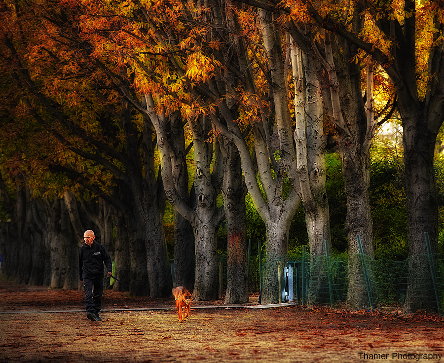Photograph  under the trees by thamer saad on 500px