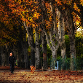 under the trees by thamer saad (aroma4444)) on 500px.com