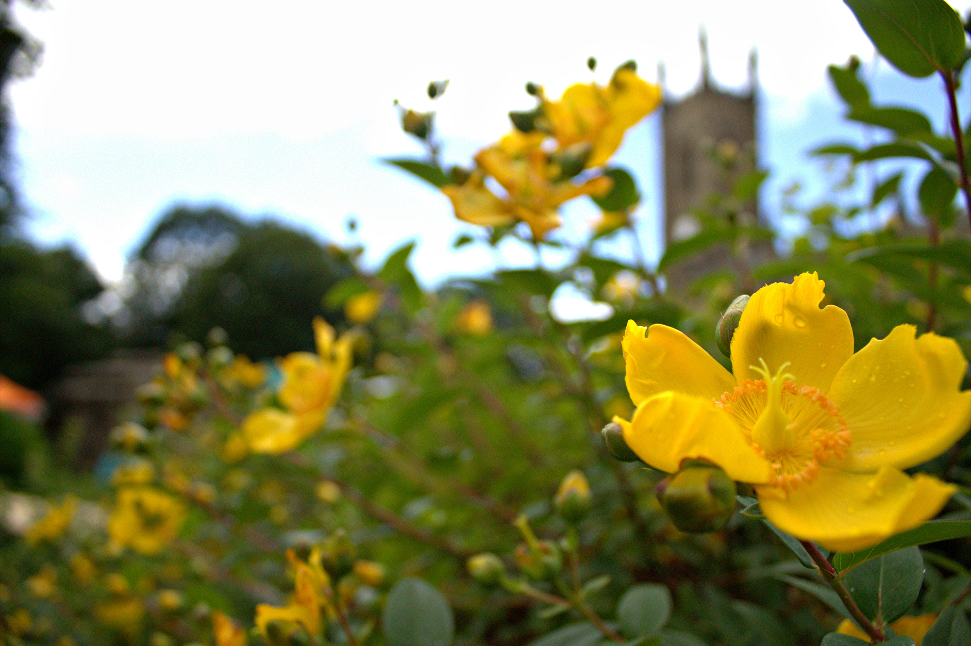 Photograph Flowers in the graveyard by Gerard  Hunter on 500px