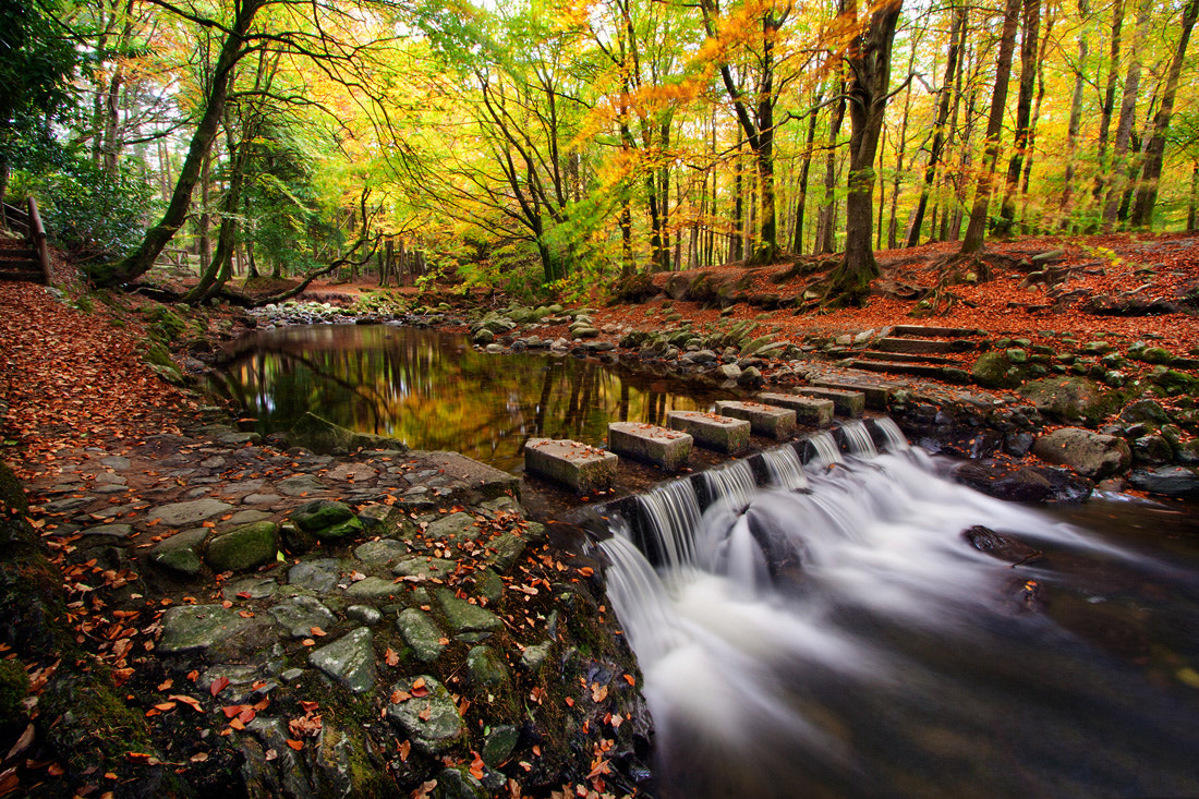 Photograph Tollymore Stepping Stones by Stephen Emerson on 500px