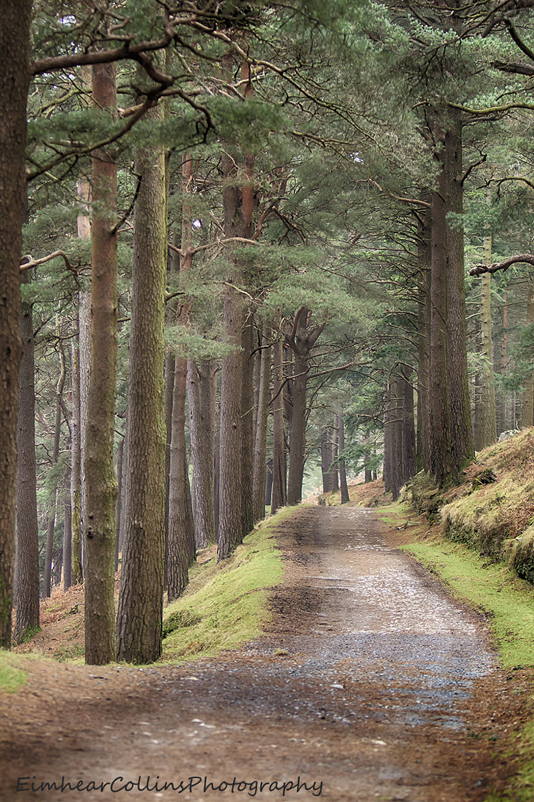 Photograph Forest Trail by Eimhear Collins on 500px