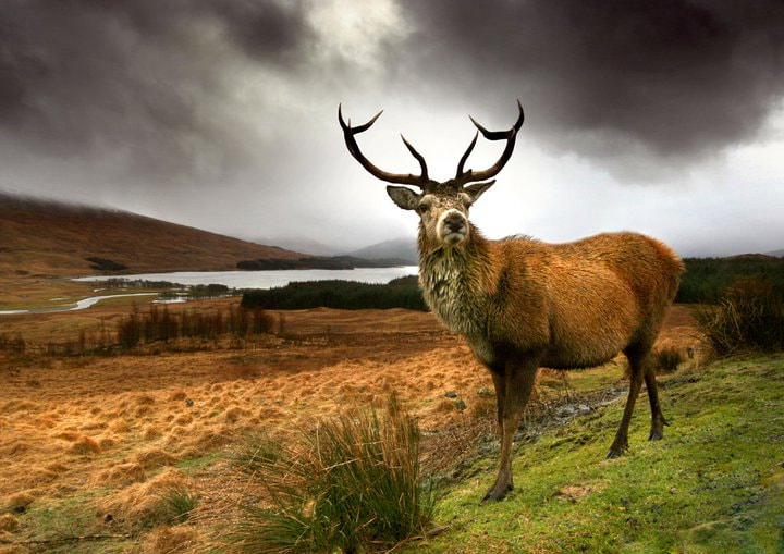 Photograph Monarch of the Glen by Angie Latham on 500px