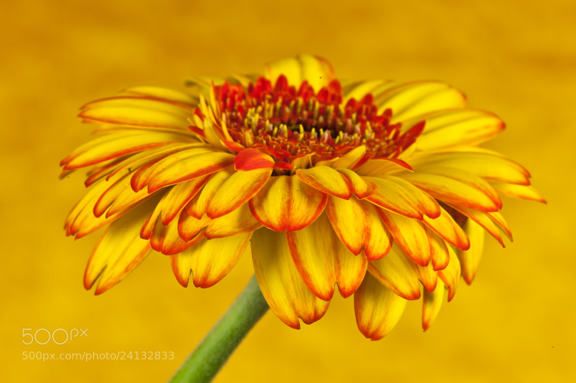 Photograph Hello Yellow II by Jenni Lucas on 500px