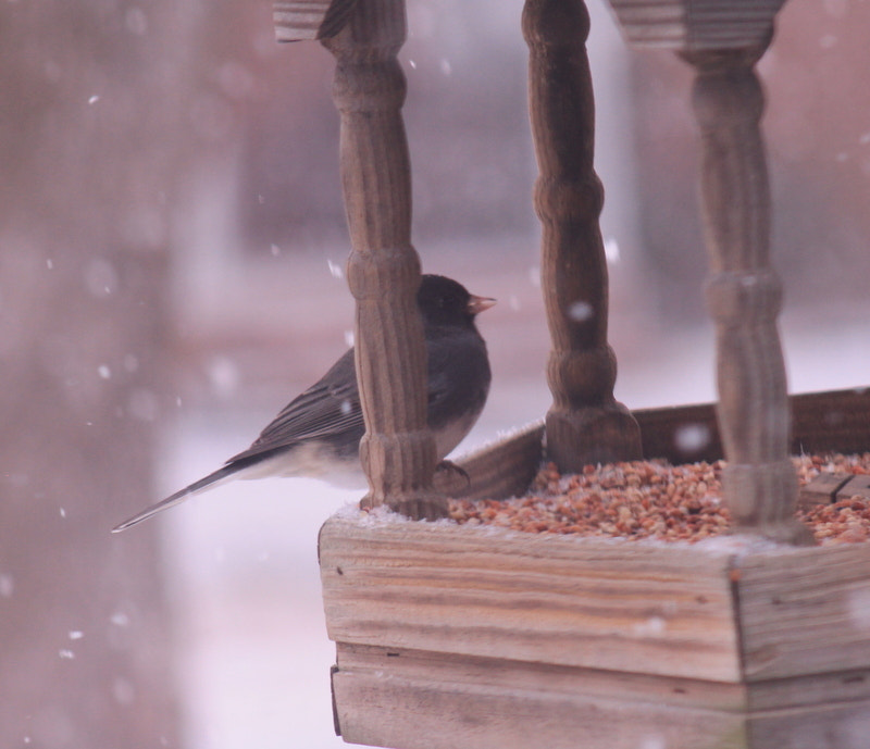Photograph Lunch in the snow by Wendy Dickey on 500px