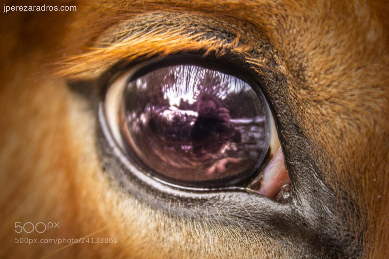 Photograph Reflection by Javier Pérez-Aradros on 500px