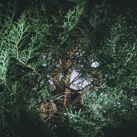 Dentro de lo Oculto, Fujifilm FinePix SL310