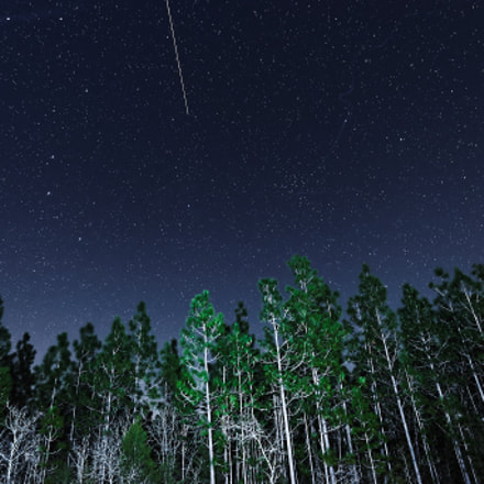 Night Woods, Nikon D610