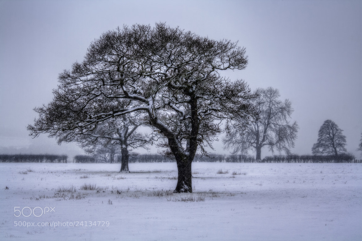 Photograph Snowy Tree by Ian Mitchell on 500px