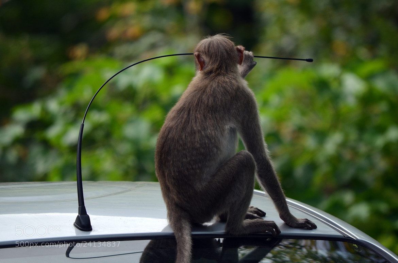 Photograph I can't hear the Radio by Gopal Kumarappan on 500px