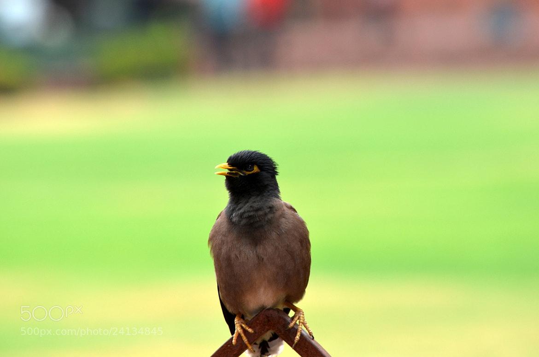 Photograph I can balance ! by Gopal Kumarappan on 500px