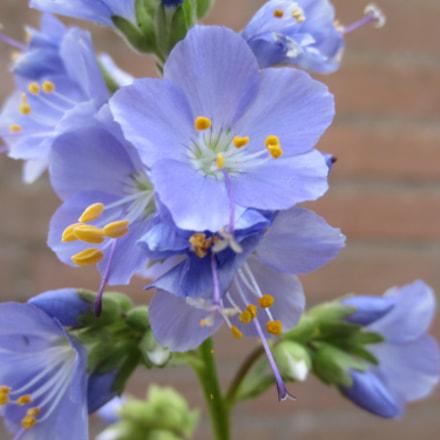 Flowers in my garden, Canon IXUS 220HS